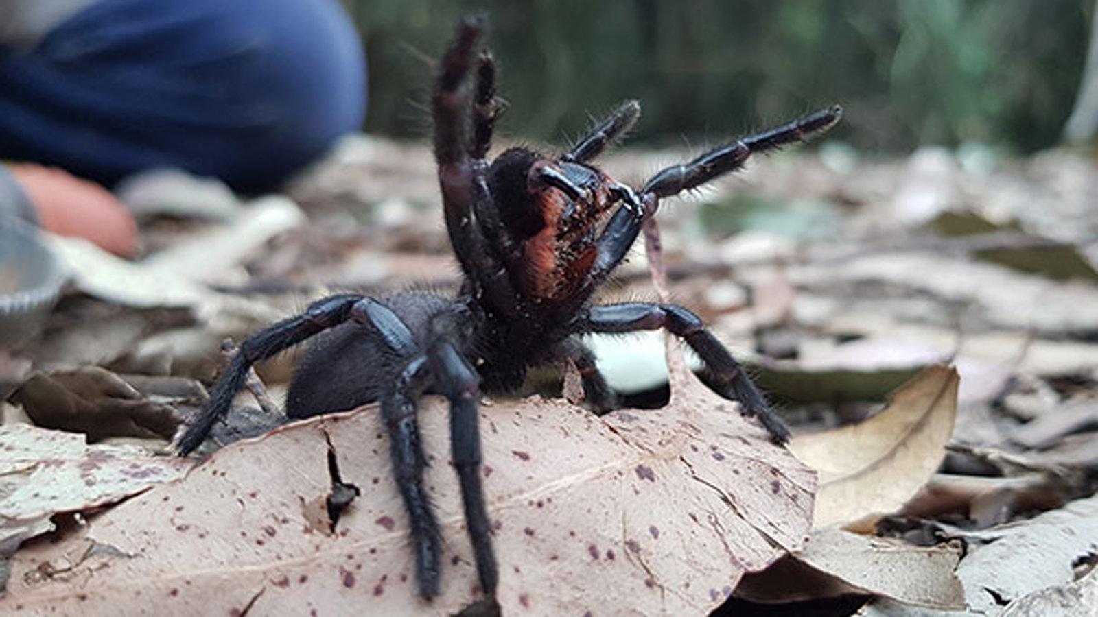 عنکبوت ها در قیف وب خطرناک هستند – کلیک – اخبار برای کودکان – اخبار