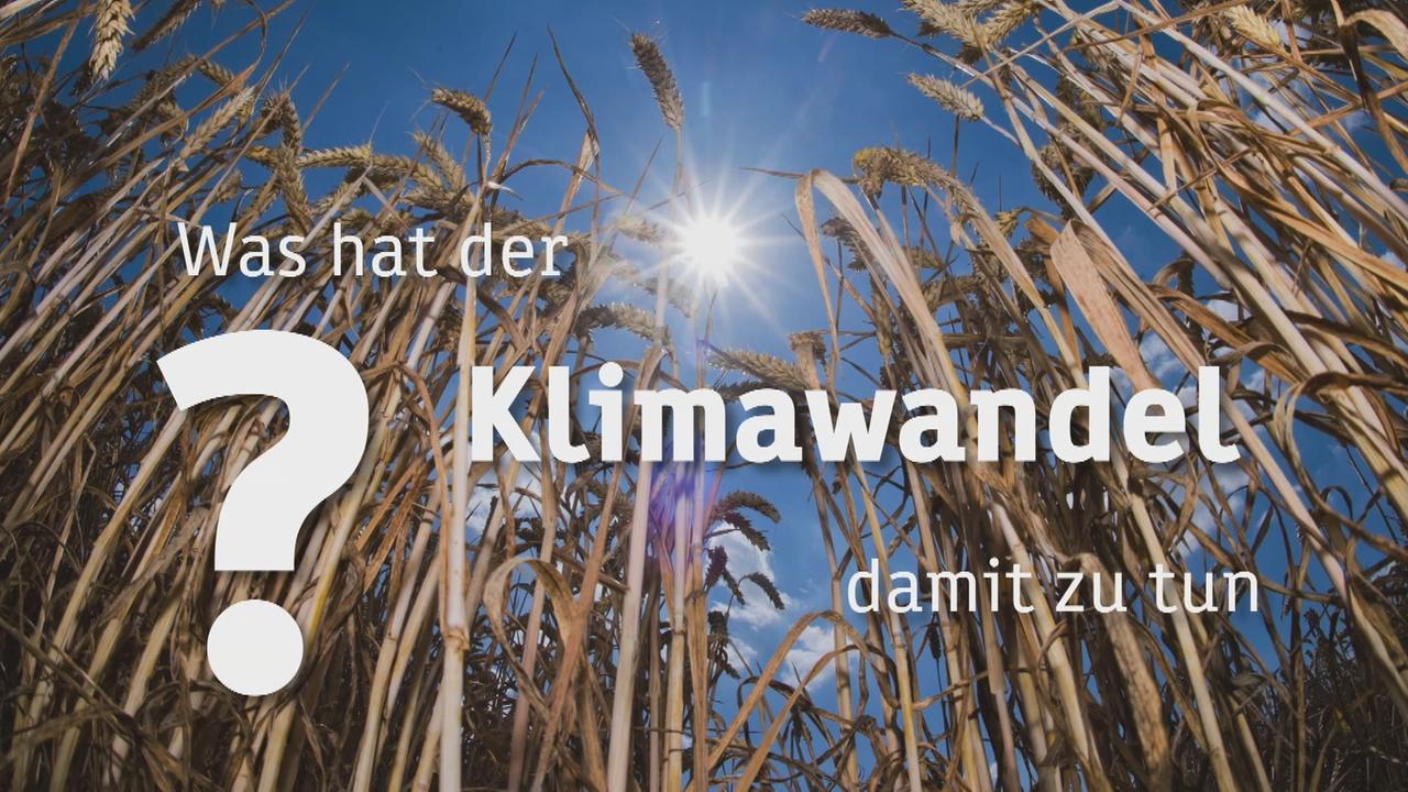 ZDFtivi – تغییرات اقلیمی چه چیزهای مشترکی دارند؟