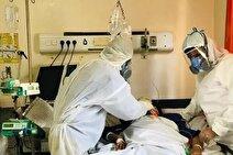 سازمان غذا و دارو در مورد قارچ سیاه تقلبی هشدار می دهد